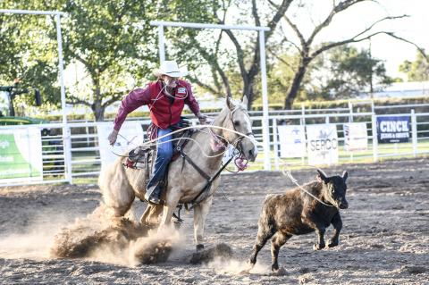 Competitor throws his slack and gets ready to dismount in the tie-down calf-roping competition on Friday.
