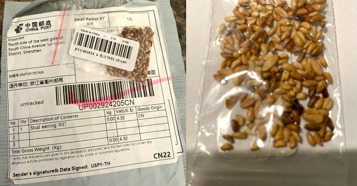 Mystery seeds arrive in Texas