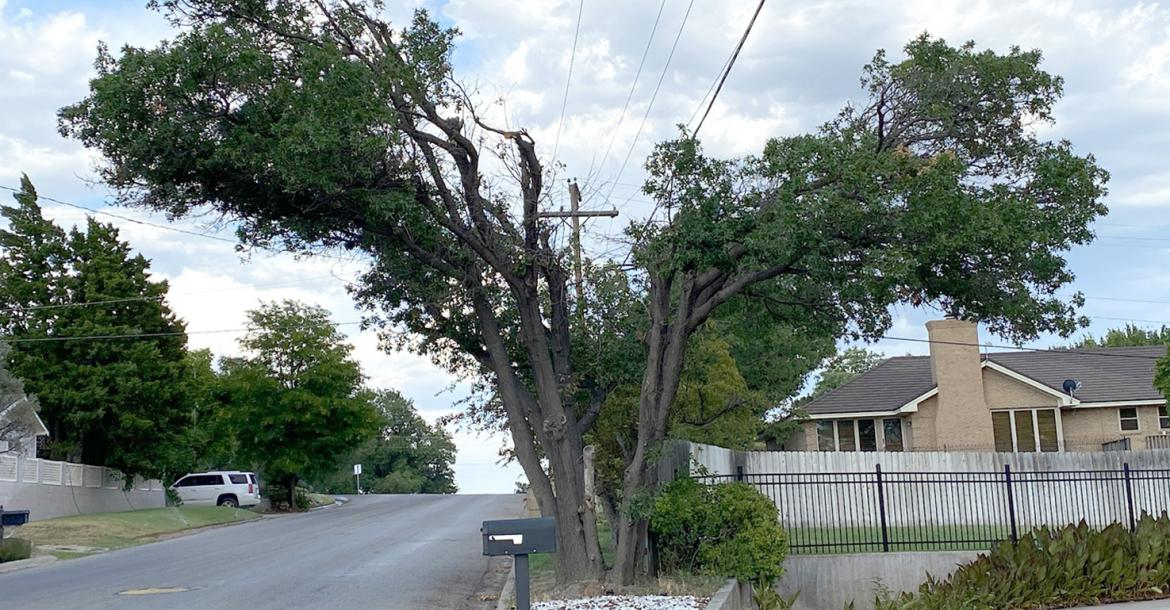Xcel Energy officials respond to tree-trimming complaints with visit to Canadian